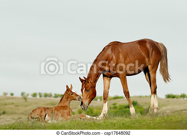 mare and foal - csp17648092