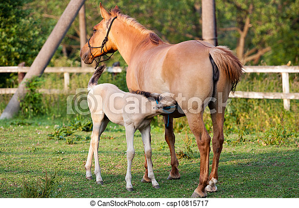 Mare and her foal - csp10815717