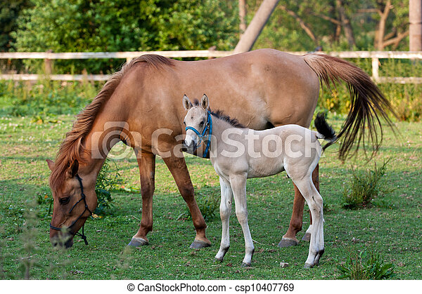 Mare and her foal - csp10407769