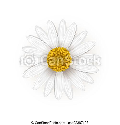 margarida flor - csp22387107
