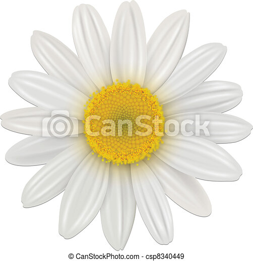 Daisy Flower - csp8340449