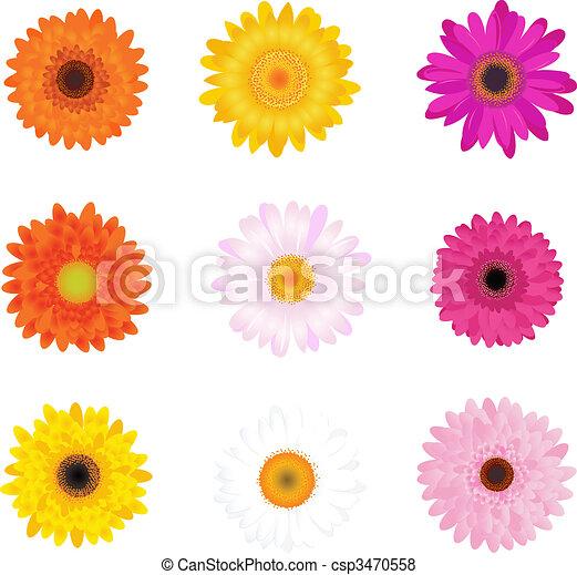 margaritas coloridas - csp3470558