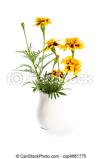 Marigold flowers in vase isolated on a white background marigold flowers in vase csp4881775 mightylinksfo