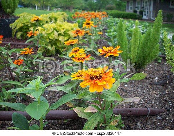 Marigold Flowers - csp28836447