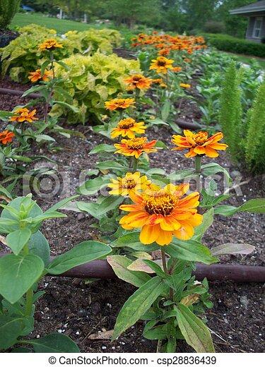 Marigold Flowers - csp28836439