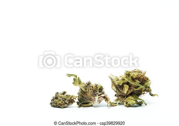marijuana - csp39829920