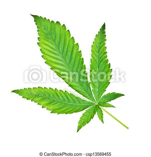 marijuana - csp13569455