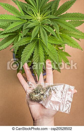 marijuana - csp20528502