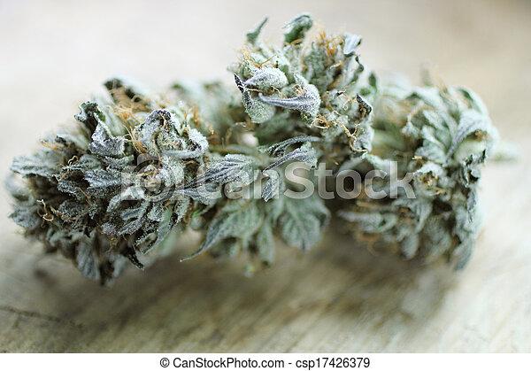 marijuana, broto - csp17426379