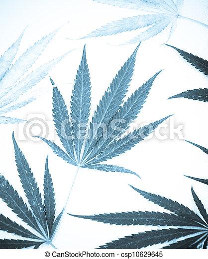 marijuana - csp10629645