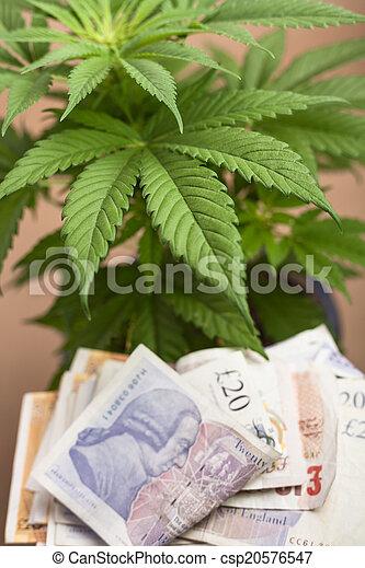 marijuana, negócio - csp20576547