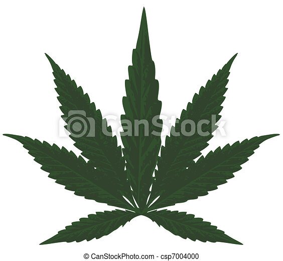 Marijuana - csp7004000