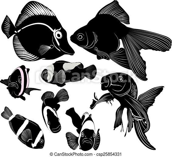 Marine Aquarium Fish