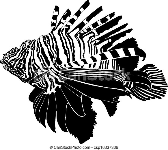 marine aquarium fish Zebra Lionfish - csp18337386