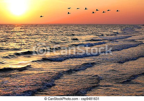 marine, coucher soleil, canards - csp9481631