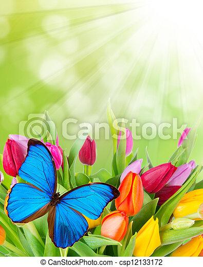 Flores de primavera con mariposa - csp12133172