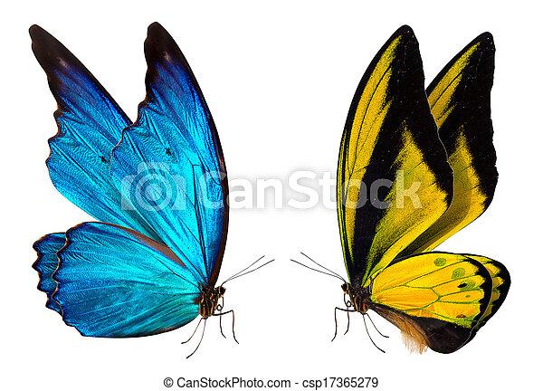 Fondo macro de mariposa - csp17365279