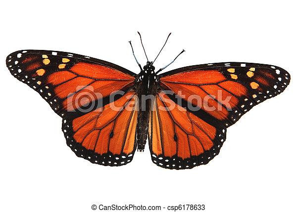 Mariposa Monarca - csp6178633