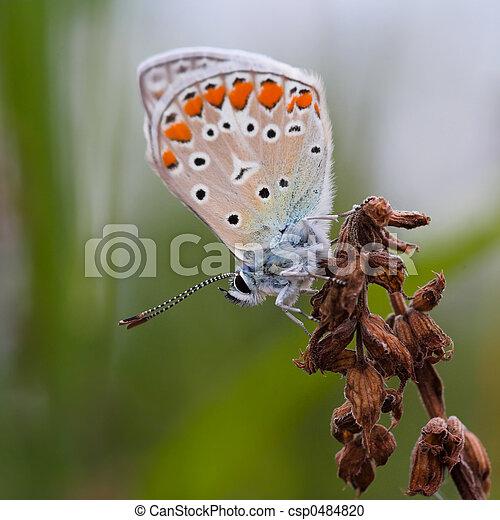 El primer plano de una mariposa - csp0484820