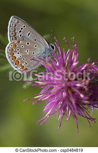 El primer plano de una mariposa - csp0484819