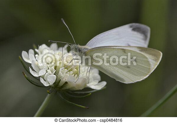 El primer plano de una mariposa - csp0484816