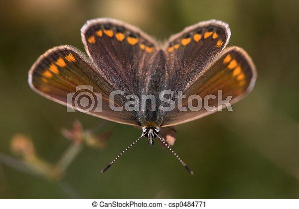 El primer plano de una mariposa - csp0484771