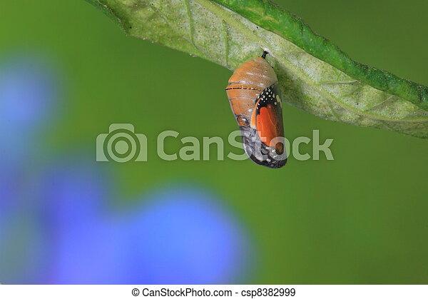 Un momento increíble sobre una mariposa - csp8382999