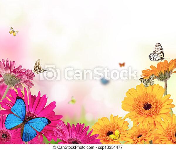 Flores de Gerber con mariposas - csp13354477