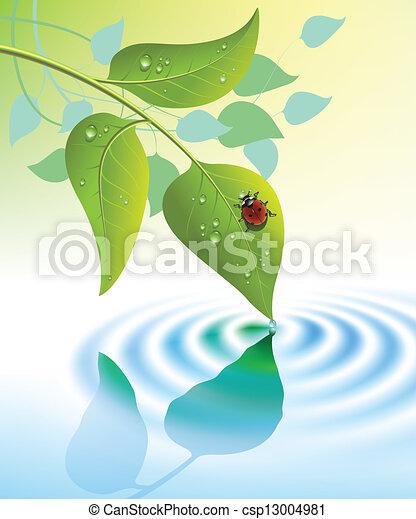 mariquita, hojas, verde - csp13004981