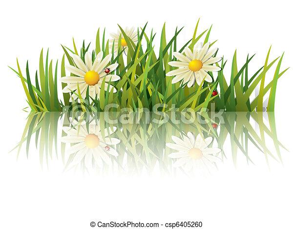 Hierba verde con mariquita - csp6405260