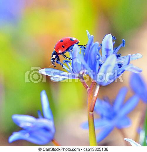 mariquita, solo, flores, violeta - csp13325136