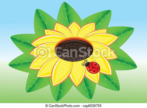 mariquita, sunflowe - csp6036755