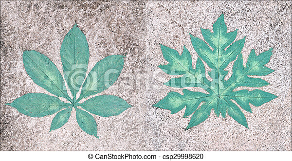 Marks of leaf on the concrete pavement. - csp29998620