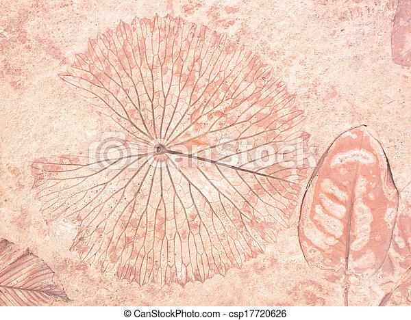 marks of leaf - csp17720626