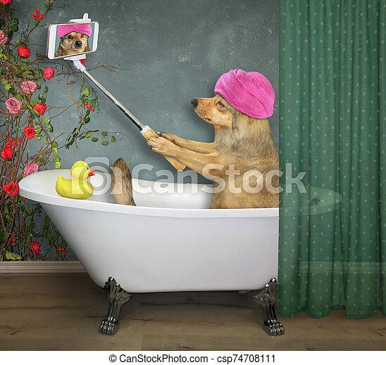 marques, chien, 3, selfie, bain - csp74708111
