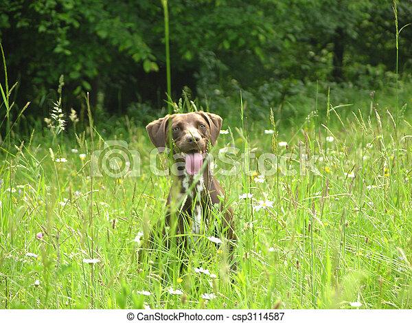 Perro marrón casi escondido en el campo abierto - csp3114587
