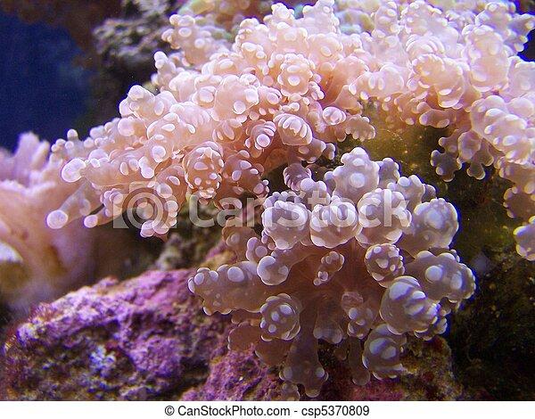 marrón, coral, huevas de rana - csp5370809