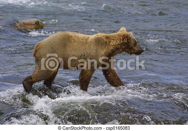 Joven oso pardo - csp0165083