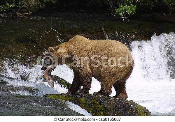 Oso marrón con pescado - csp0165087