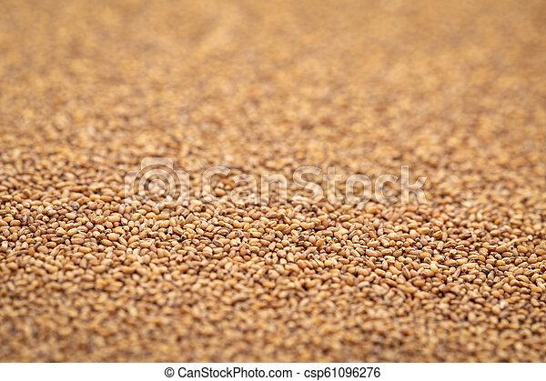 marrom, grão, teff, fundo - csp61096276