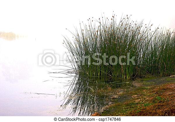 marsh grass - csp1747846