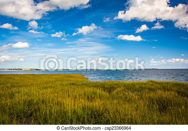 Marsh grasses at the Waterfront Park, in Charleston, South Carol - csp23366964