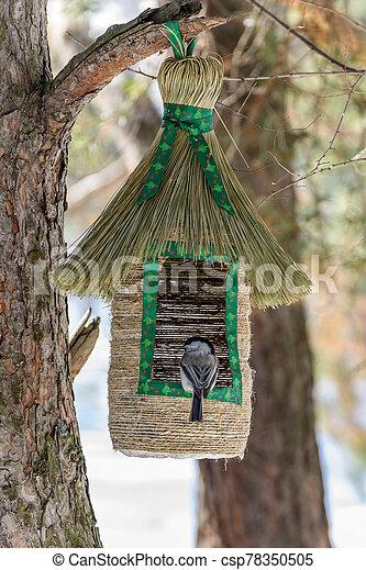 Marsh tit at the bird feeder - csp78350505