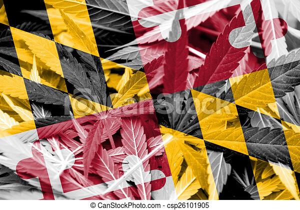 Wonderful Maryland state flag on cannabis background. drug policy  FX79