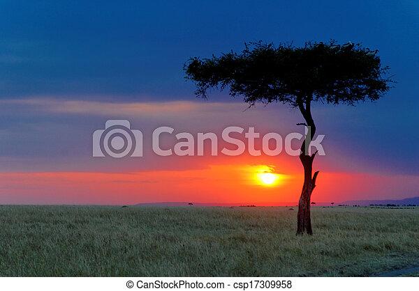 masai, sonnenuntergang, mara - csp17309958