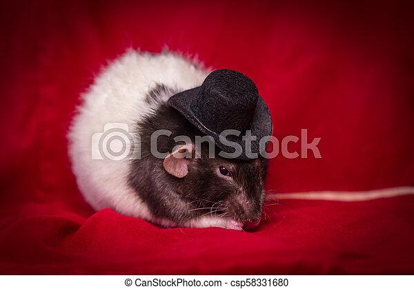 Sombrero de rata mascota - csp58331680