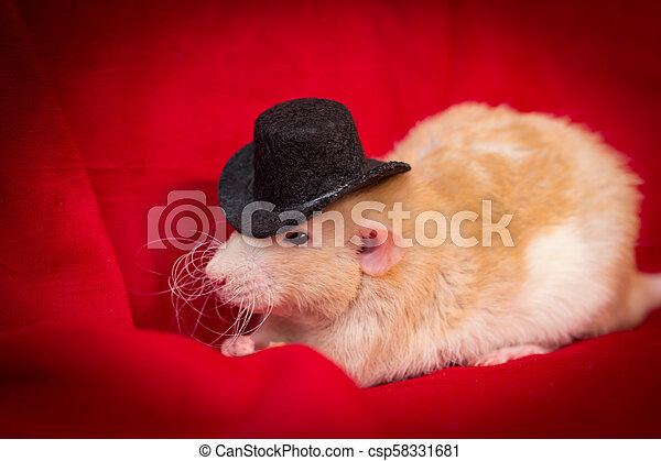 Sombrero de rata mascota - csp58331681