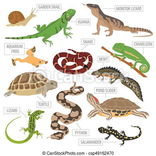 anfibios ilustraciones y clip art 14 185 anfibios imagenes libres