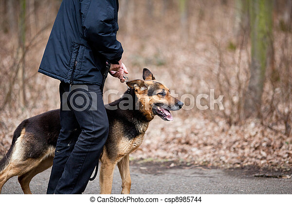 Master and his obedient (German Shepherd) dog - csp8985744