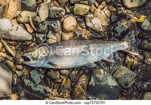 matado, concepto, poachers, pez, pescadores, gun. - csp73750791